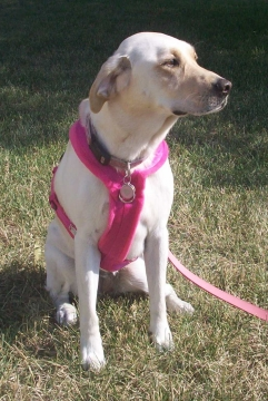 eDog Fleece Dog Harness